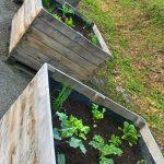 Les jardins partagés, un projet sur le long terme